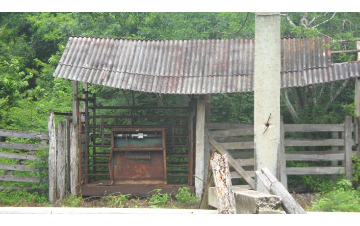 Foto de rancho en venta en  , tizimin centro, tizimín, yucatán, 1927747 No. 13