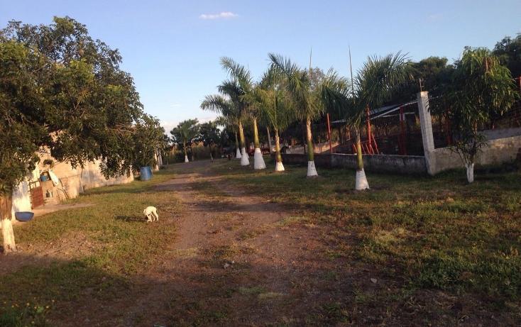 Foto de rancho en venta en  , tlayca, jonacatepec, morelos, 2012000 No. 05