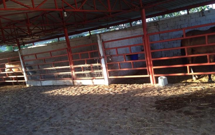 Foto de rancho en venta en  , tlayca, jonacatepec, morelos, 2012000 No. 09