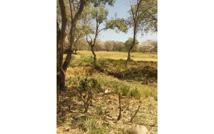 Foto de terreno habitacional en venta en  , tonalá 2000, tonalá, chiapas, 855369 No. 04