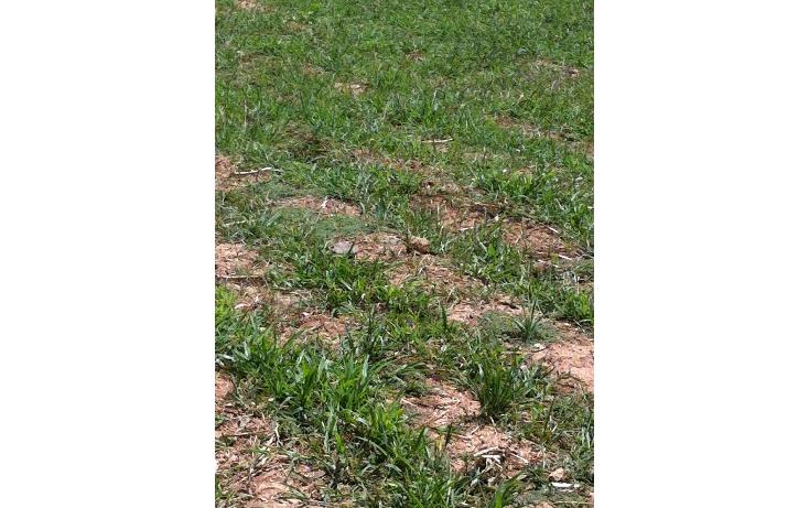 Foto de terreno comercial en venta en  , tonatico, tonatico, méxico, 1169853 No. 07
