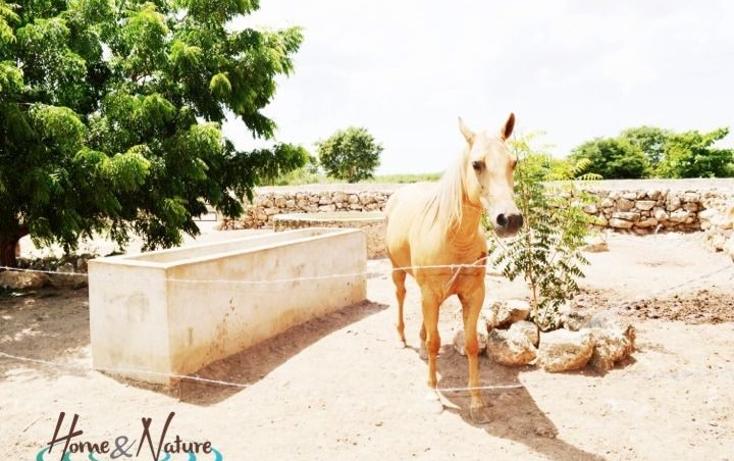 Foto de rancho en venta en  , too, mocochá, yucatán, 948735 No. 27