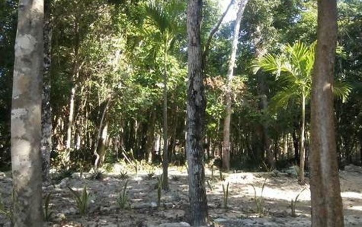 Foto de terreno habitacional en venta en  , tulum centro, tulum, quintana roo, 1322917 No. 05