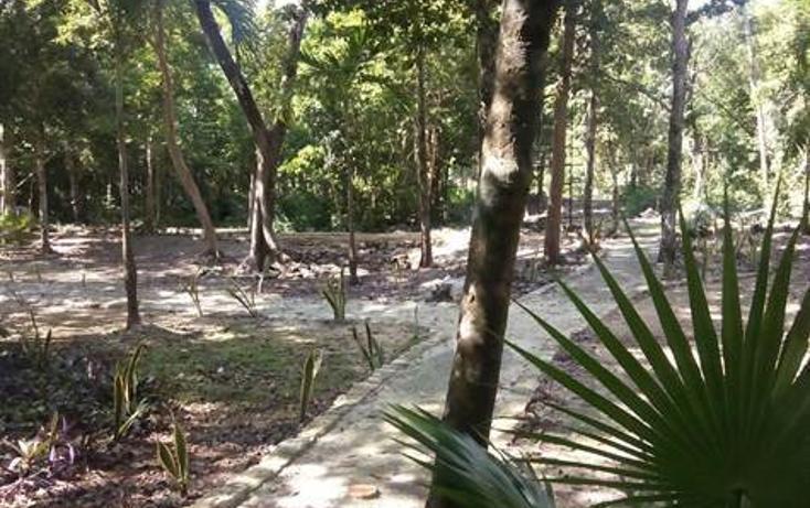 Foto de terreno habitacional en venta en  , tulum centro, tulum, quintana roo, 1322917 No. 06