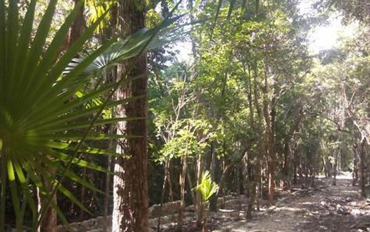 Foto de terreno habitacional en venta en  , tulum centro, tulum, quintana roo, 1322917 No. 08