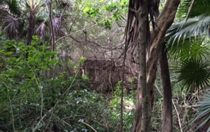 Foto de terreno habitacional en venta en  , tulum centro, tulum, quintana roo, 1625696 No. 14