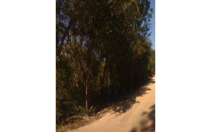 Foto de terreno habitacional en venta en  , tulum centro, tulum, quintana roo, 1863006 No. 06