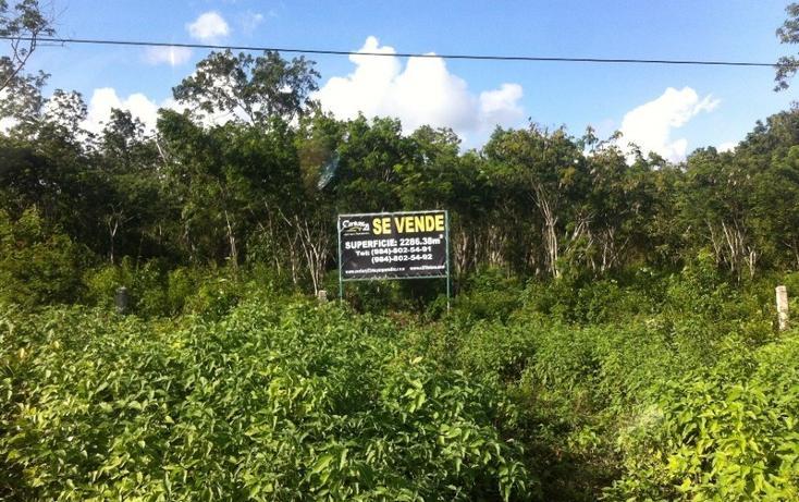 Foto de terreno habitacional en venta en  , tulum centro, tulum, quintana roo, 1863090 No. 05
