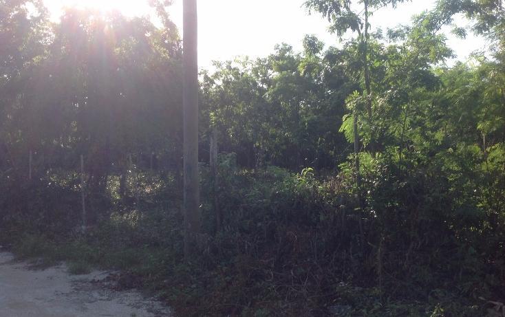 Foto de terreno habitacional en venta en  , tulum centro, tulum, quintana roo, 1893146 No. 03