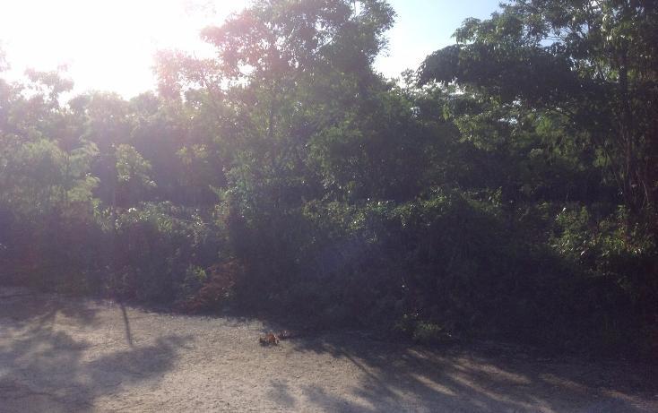 Foto de terreno habitacional en venta en  , tulum centro, tulum, quintana roo, 1893146 No. 06