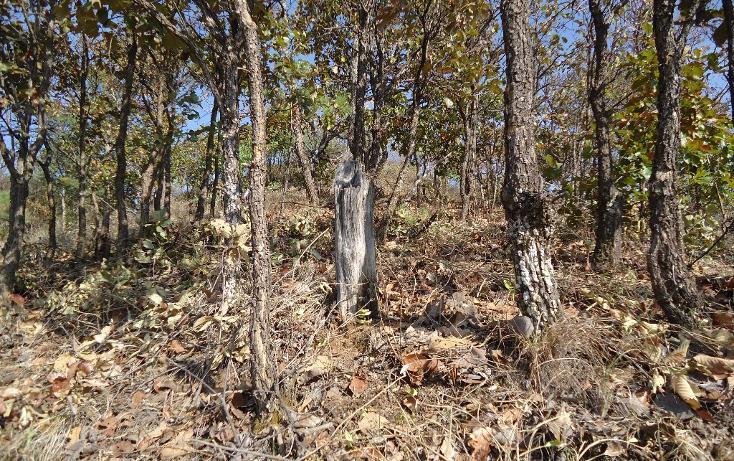 Foto de terreno habitacional en venta en  , valle de bravo, valle de bravo, méxico, 1697876 No. 06