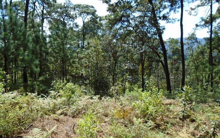 Foto de terreno habitacional en venta en  , valle de bravo, valle de bravo, méxico, 1698024 No. 09