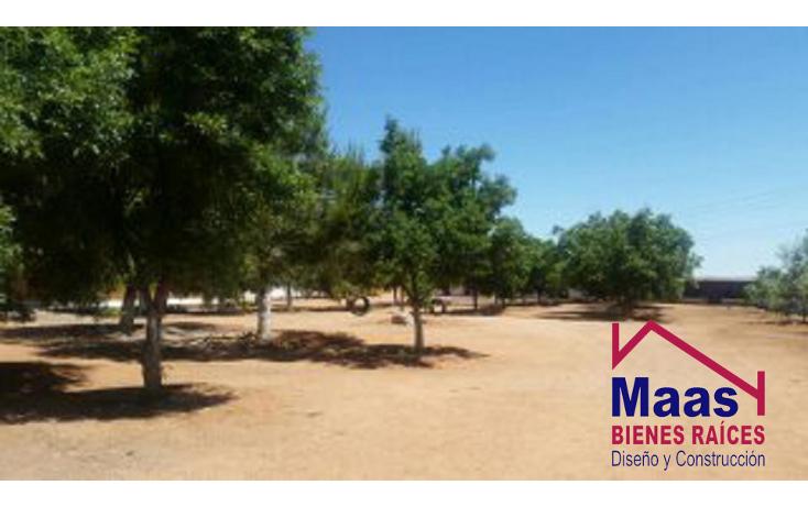 Foto de rancho en venta en  , verde, chihuahua, chihuahua, 1459971 No. 10
