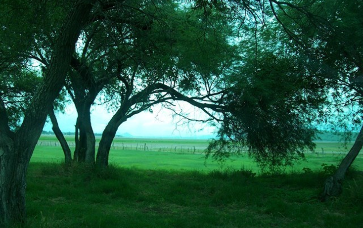 Foto de terreno habitacional en venta en  , villa corona centro, villa corona, jalisco, 2034134 No. 02