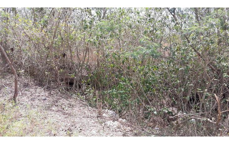 Foto de terreno habitacional en venta en  , xmatkuil, mérida, yucatán, 825025 No. 06
