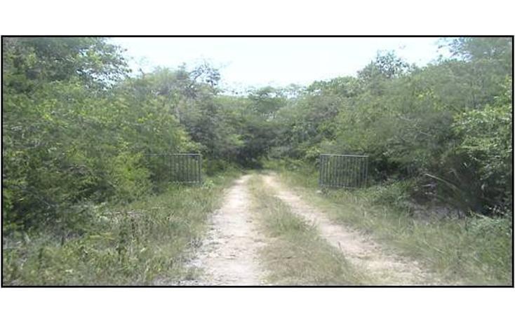 Foto de terreno habitacional en venta en  , xtohil, chankom, yucatán, 1459729 No. 02