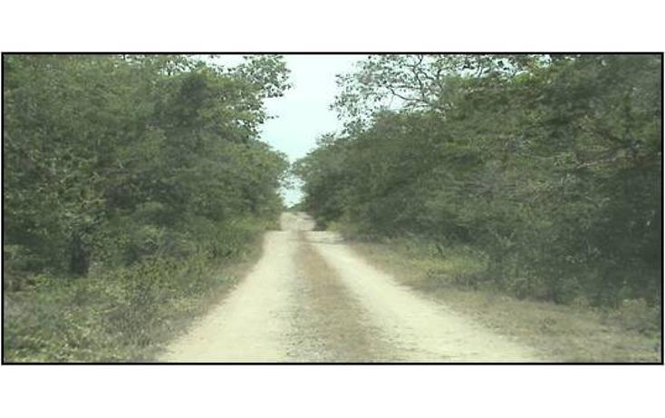Foto de terreno habitacional en venta en  , xtohil, chankom, yucatán, 1459729 No. 03