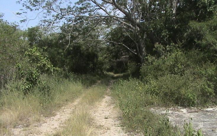 Foto de terreno habitacional en venta en  , xtohil, chankom, yucatán, 1459729 No. 06