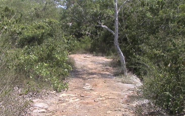 Foto de terreno habitacional en venta en  , xtohil, chankom, yucatán, 1459729 No. 07