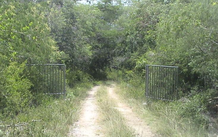 Foto de terreno habitacional en venta en  , xtohil, chankom, yucatán, 1459729 No. 10