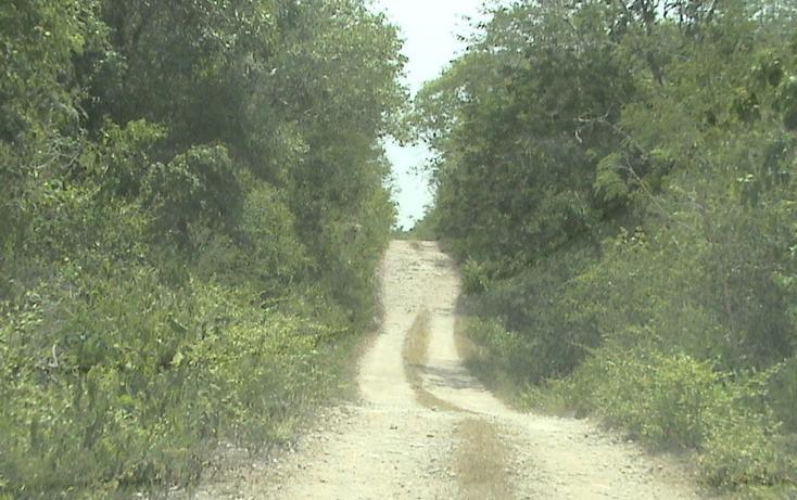 Foto de terreno habitacional en venta en  , xtohil, chankom, yucatán, 1459729 No. 11