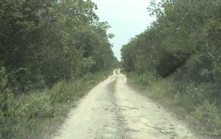 Foto de terreno habitacional en venta en  , xtohil, chankom, yucatán, 1459729 No. 12
