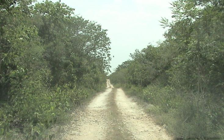 Foto de terreno habitacional en venta en  , xtohil, chankom, yucatán, 1459729 No. 14