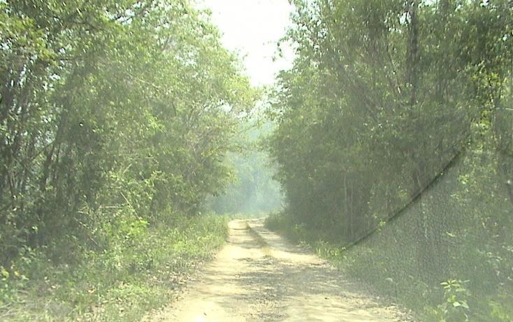 Foto de terreno habitacional en venta en  , xtohil, chankom, yucatán, 1459729 No. 15