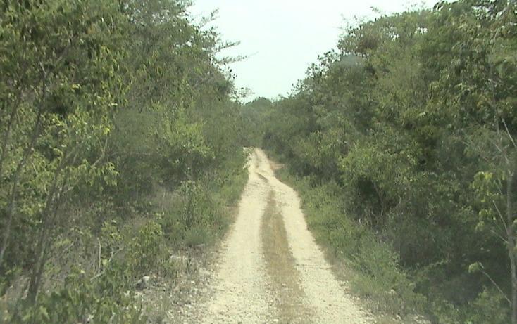 Foto de terreno habitacional en venta en  , xtohil, chankom, yucatán, 1459729 No. 16