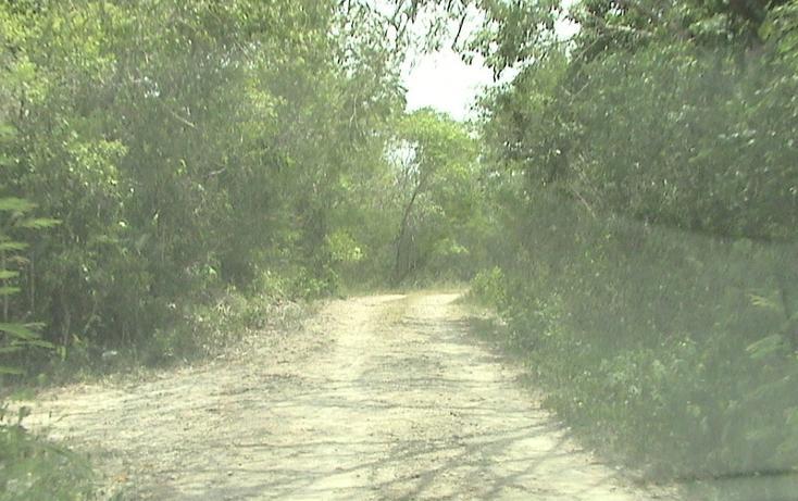 Foto de terreno habitacional en venta en  , xtohil, chankom, yucatán, 1459729 No. 17