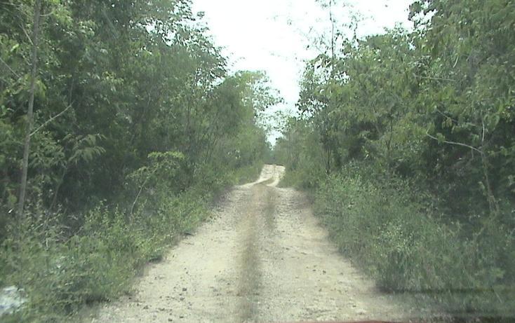 Foto de terreno habitacional en venta en  , xtohil, chankom, yucatán, 1459729 No. 18
