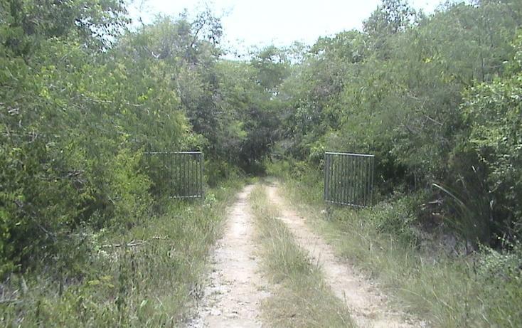 Foto de terreno habitacional en venta en  , xtohil, chankom, yucatán, 1459729 No. 21
