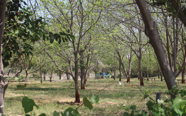 Foto de terreno habitacional en venta en  , y, parras, coahuila de zaragoza, 1776334 No. 10