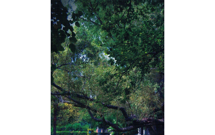 Foto de terreno habitacional en venta en  , y, parras, coahuila de zaragoza, 1776592 No. 16