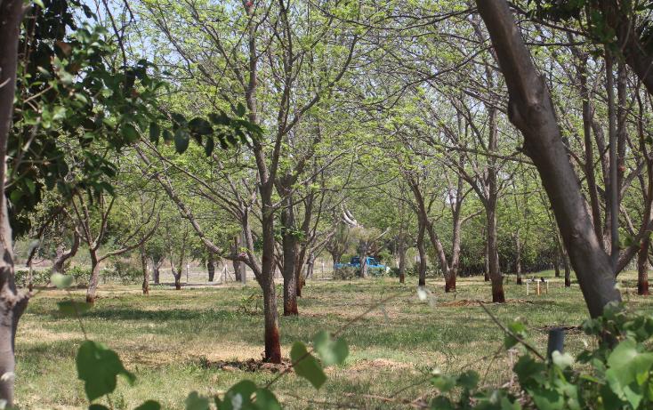 Foto de terreno habitacional en venta en  , y, parras, coahuila de zaragoza, 1786246 No. 10
