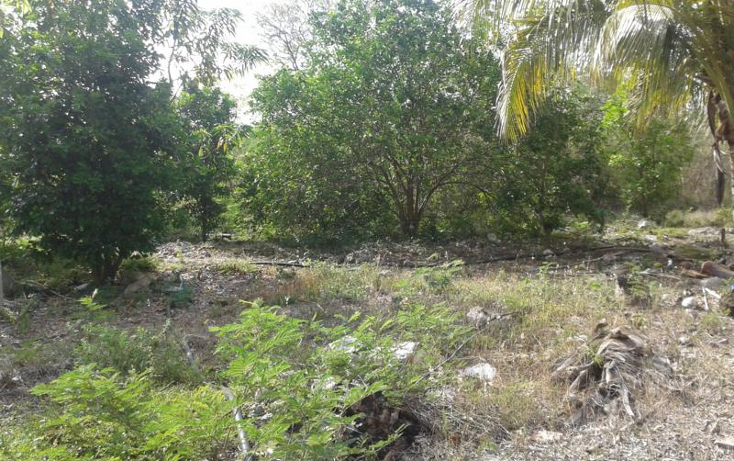 Foto de terreno habitacional en venta en  , yaxche de pe?n, uc?, yucat?n, 1323241 No. 03