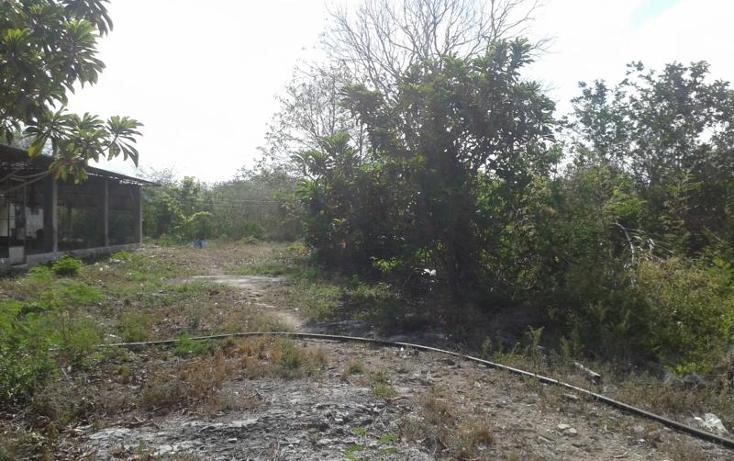 Foto de terreno habitacional en venta en  , yaxche de pe?n, uc?, yucat?n, 1323241 No. 06