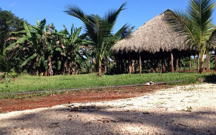 Foto de terreno habitacional en venta en  , yokdzonot, calotmul, yucatán, 1955461 No. 09