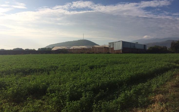Foto de terreno habitacional en venta en, zacoalco de torres centro, zacoalco de torres, jalisco, 1492611 no 01