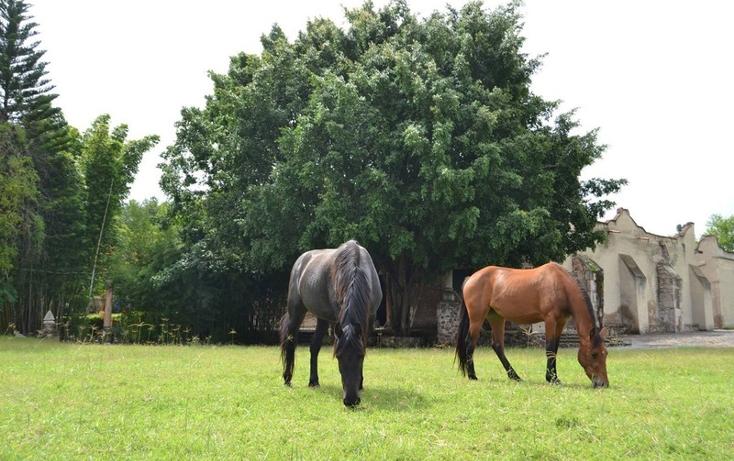 Foto de rancho en venta en  , zapotlanejo, zapotlanejo, jalisco, 996371 No. 18