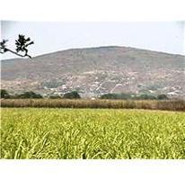 Foto de terreno industrial en venta en  0, casasano, cuautla, morelos, 2674273 No. 01
