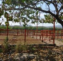 Foto de rancho en venta en  36, tehuixtla, jojutla, morelos, 2546323 No. 01