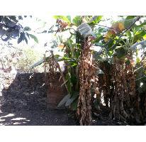 Foto de terreno habitacional en venta en  6, itzamatitlán, yautepec, morelos, 2686388 No. 01
