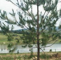 Foto de terreno habitacional en venta en Tapalpa, Tapalpa, Jalisco, 2375813,  no 01