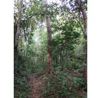 Foto de terreno comercial en venta en  , akumal, tulum, quintana roo, 2605910 No. 01