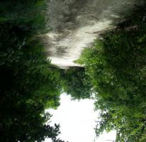 Foto de terreno habitacional en venta en, alfredo v bonfil, benito juárez, quintana roo, 1435231 no 01