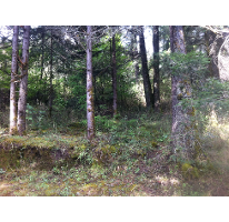 Foto de terreno habitacional en venta en  , bosques de san cayetano, mineral del monte, hidalgo, 2613266 No. 01