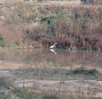 Foto de terreno habitacional en venta en camino de tolcayuca, tolcayuca centro, tolcayuca, hidalgo, 405378 no 01