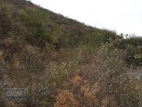 Foto de terreno habitacional en venta en  , cañada del sur a. c., monterrey, nuevo león, 1729480 No. 01
