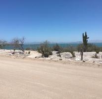 Foto de terreno habitacional en venta en  , centenario, la paz, baja california sur, 3268317 No. 01